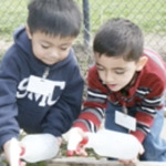 Dual Language Learners Head Start Programs